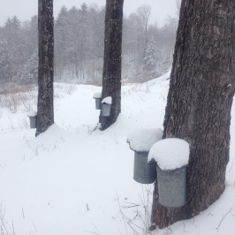 spring snow 5