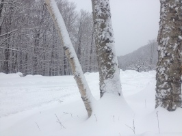 spring snow 6