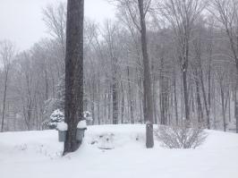 spring snow 8