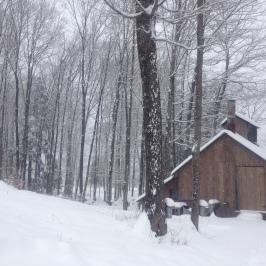 spring snow 9