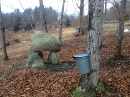 maple sugaring 10