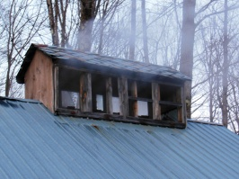 maple sugaring 11
