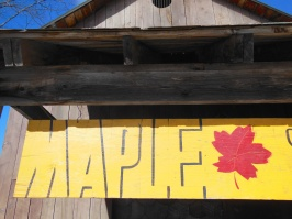 maple sugaring 2