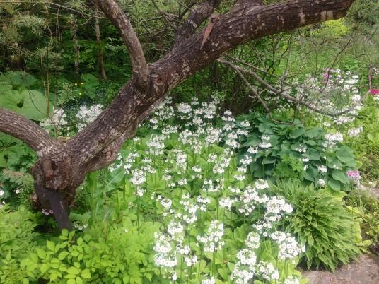 north hill gardens 2