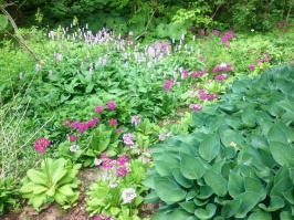 north hill gardens 6